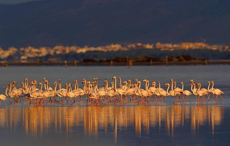 Flamencos, Parque Natural del Delta del Ebro